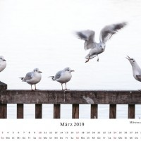kalender-606-(c)-wenzel-oschington