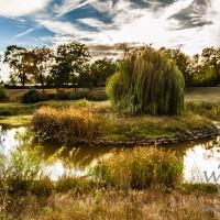 Herbst -  Klosterbergegarten mit Teich