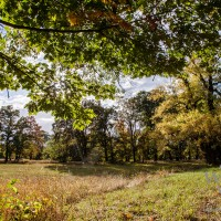 Herbst im Rotehornpark